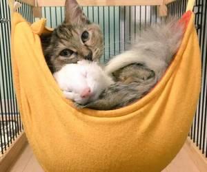 cat and ferret image