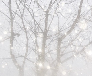 header, tree, and winter image