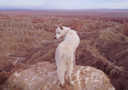wolf, dog, and nature image