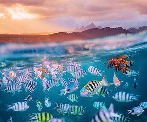 fish, mauritius, and ocean image