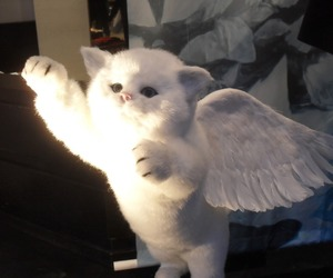 cat, cute, and angel image