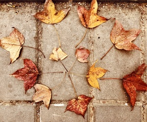 autumn, beautiful, and cool image