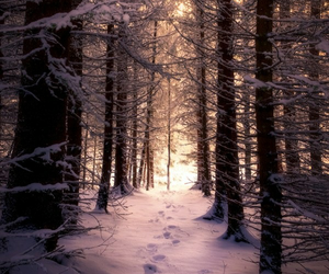 snow, beautiful, and forest image