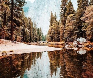 nature, autumn, and photography image