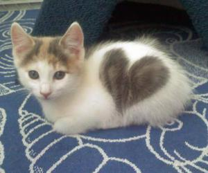 heart, kitten, and cute image