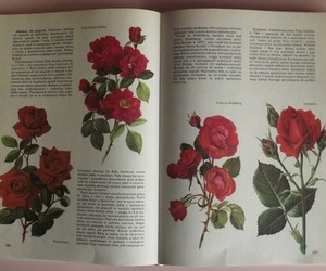 alternative, book, and flowers image