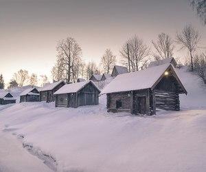 christmas, holiday, and nature image
