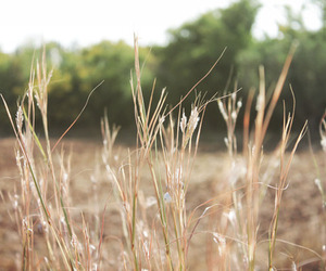 beige, nature, and fields image