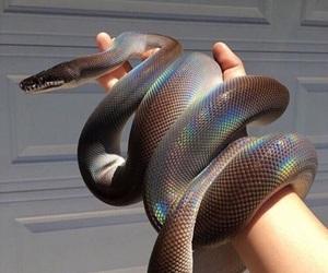 animal, beige, and diamonds image
