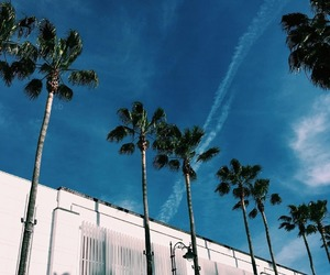 palm trees, paradise, and sky image