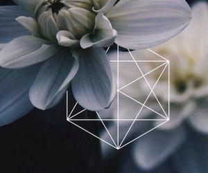 flowers, picture, and nature image