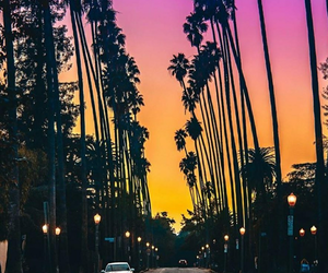 colors, palmtrees, and photography image