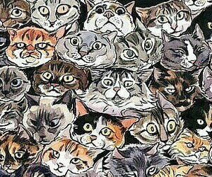 cats, wallpaper, and funny image