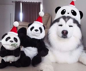 dog, panda, and cute image