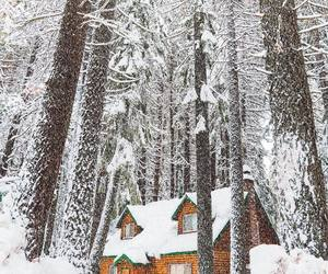 background, cabin, and christmas image