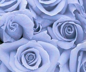 background, pastels, and roses image
