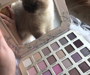 cat, makeup, and eyeshadow image