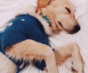 animals, puppies, and art image