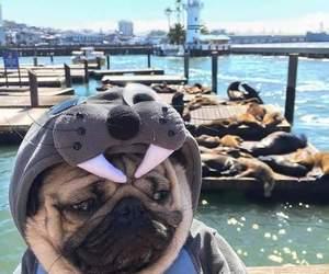 beautiful, pet, and dog image