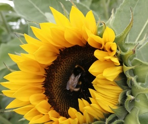 beautiful, love, and bee image