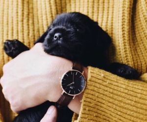 cute and black puppy image