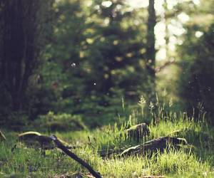 green, greenery, and landscape image
