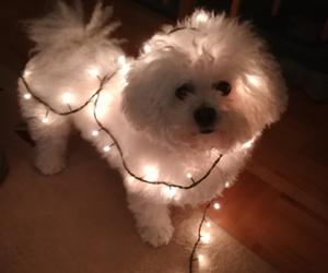 brother, christmas, and dog image