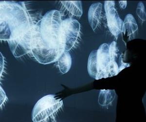 jellyfish, grunge, and blue image