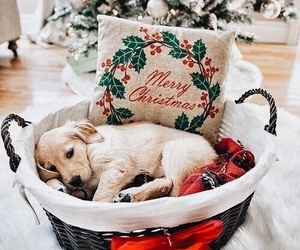 animal, new year, and puppy image