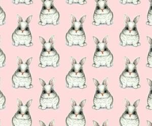 bunny, bunnys, and pink image