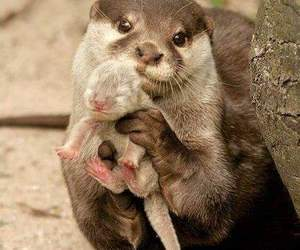 animal, otter, and baby image
