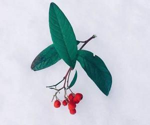 festive, mistletoe, and christmas image