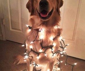 dog and lights image