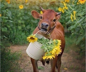 animal, baby, and flowers image