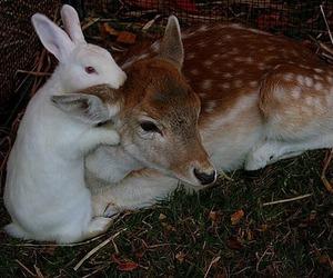 animal, bunny, and deer image