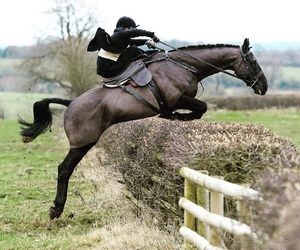equestrian, hunting, and horse image