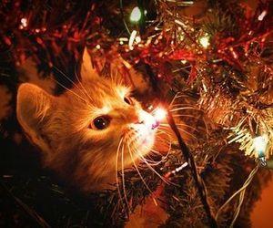 cat, christmas, and lights image