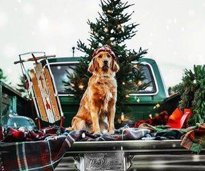 christmas, dog, and christmas tree image