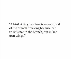 bird, branch, and fear image