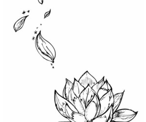 draw, flower, and lotus image