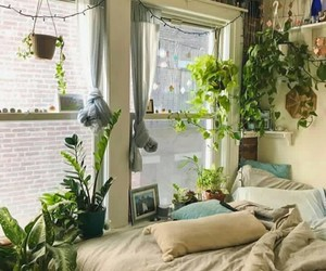plants, room, and design image