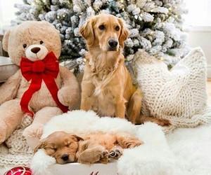 christmas, dogs, and holidays image