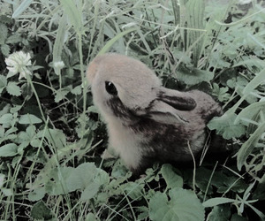 aesthetic, rabbit, and green image