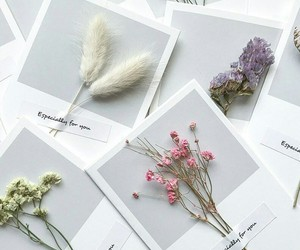 aesthetics, beauty, and flowers image