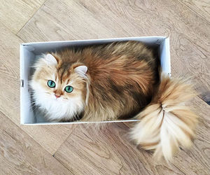 cat, animal, and box image