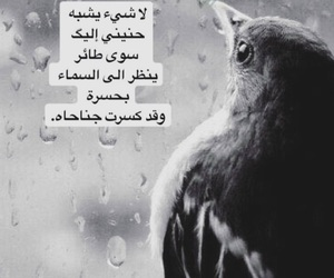 arabic, quotes, and words image