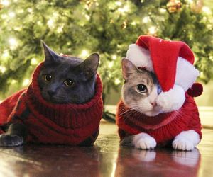 animals, cats, and christmas image