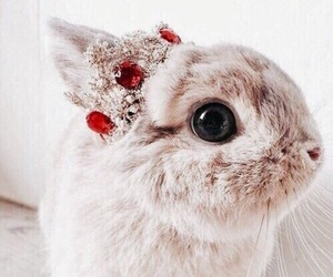 bunny, cute, and 👑 image