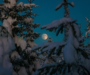 moon, snow, and trees image