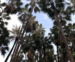 cielo, palmeras, and luna image
